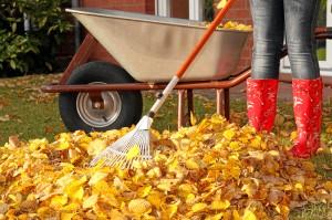 Gartenarbeit, gelber Laub, Baukarre und rote Stiefel